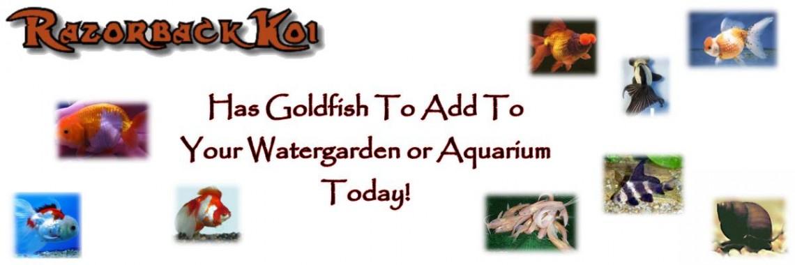 Razor Goldfish